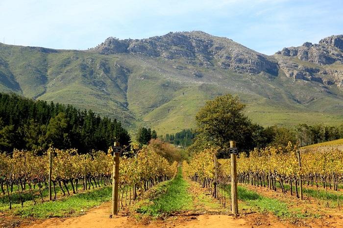 Vang Nam Phi Lanzerac Pionier Pinotage