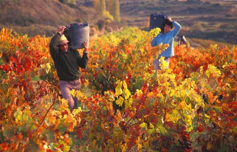 Rượu Vang Argentina Bodega Privada Blend