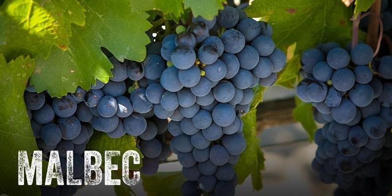 Rượu Vang argentina Ricodi Malbec Roble