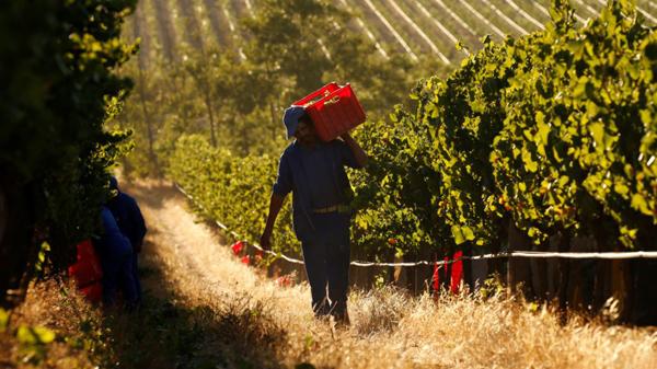 Vang Nam Phi Lanzerac Chardonnay Stellenbosch