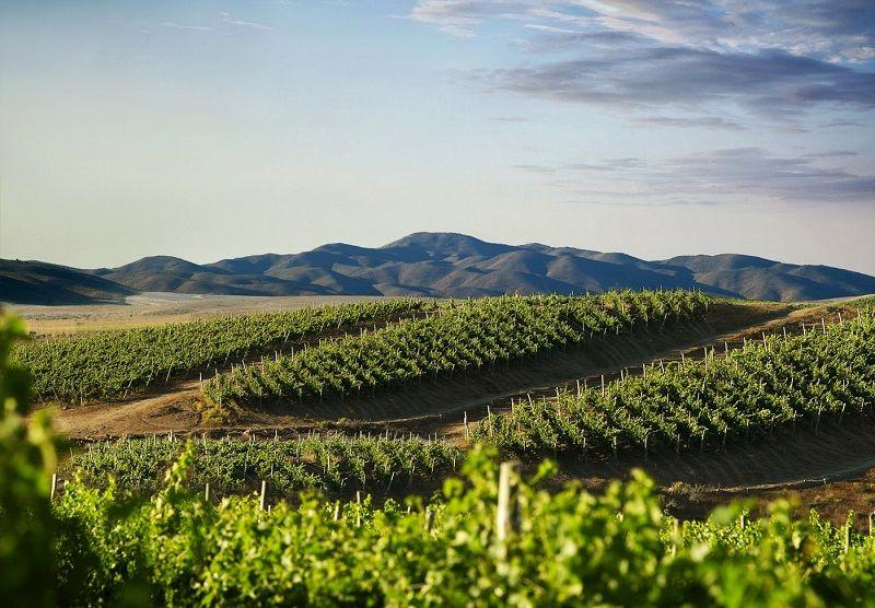 Rượu Vang Lanzerac Pinotage Stellenbosch