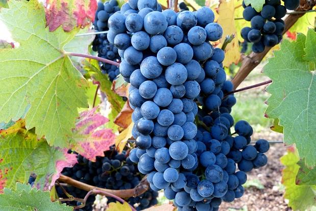 Rượu Vang Đức DR.Zenzen Vino Noire