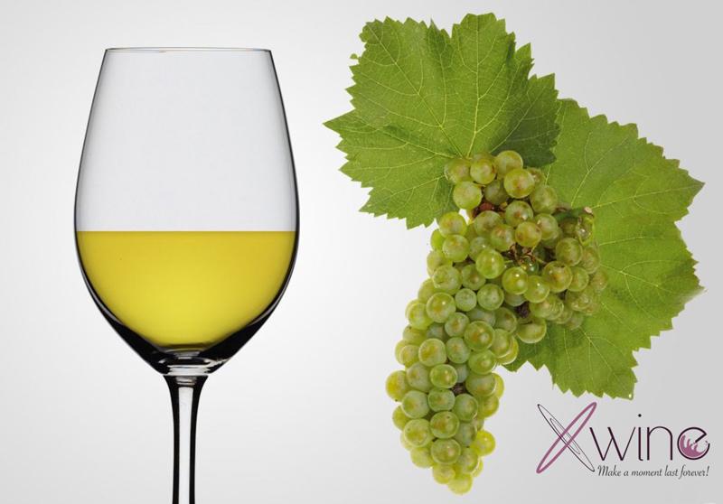 Chardonnay nho làm rượu vang trắng ngon