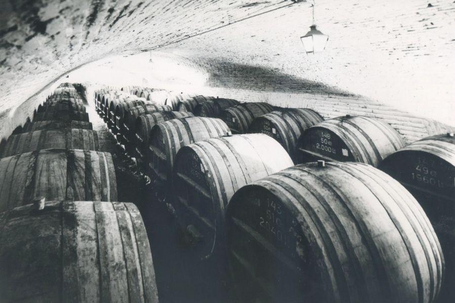 rượu vang chi lê